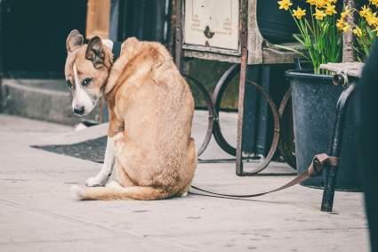 «Вести Подмосковья» рассказали, почему кинологи призывают не оставлять собаку одну