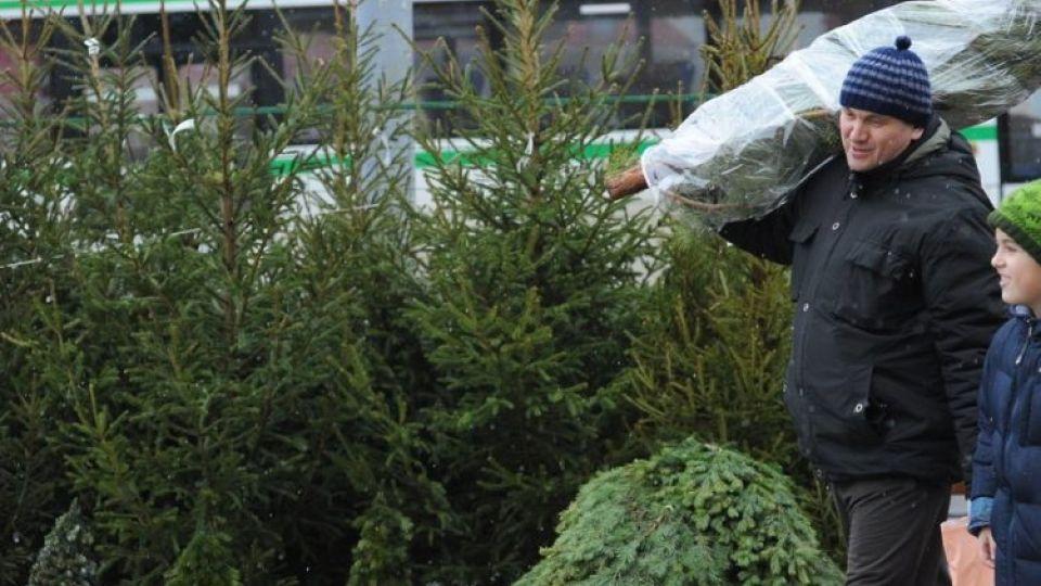В Подмосковье елочные базары заработают 4 декабря