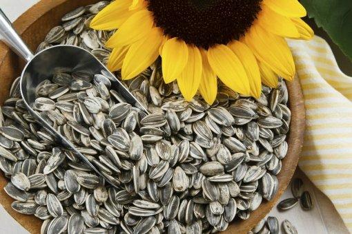 В Роскачестве рассказали о полезных и вредных свойствах семечек