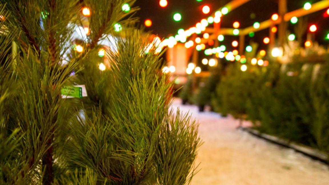 В Пензе планируется открыть 70 елочных базаров