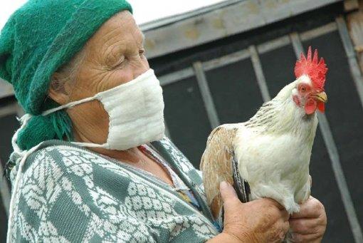 В России обнаружен птичий грипп, способный передаваться человеку