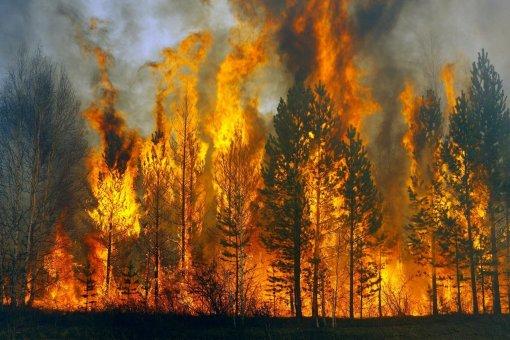 Летние пожары в Сибири выбросили в атмосферу 970 мегатонн углекислого газа